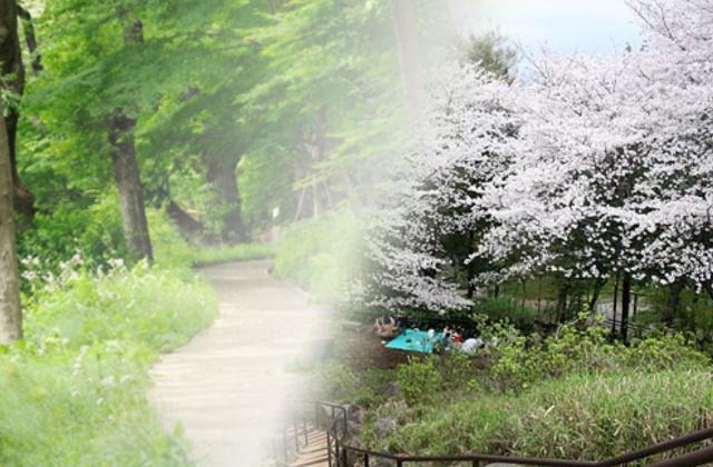 癒しスポット公園、戸山公園の画像
